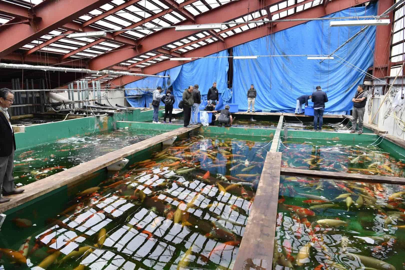154 : Expeditionen zu den Biotopen der Aquarienfische Teil 2 (Heiko Blessin) 75