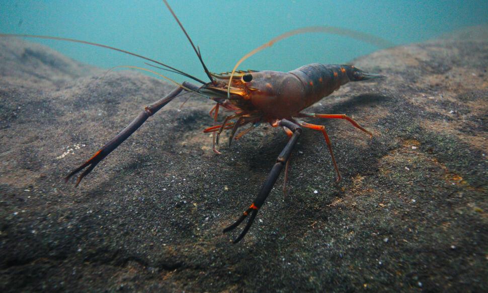 154 : Expeditionen zu den Biotopen der Aquarienfische Teil 2 (Heiko Blessin) 83