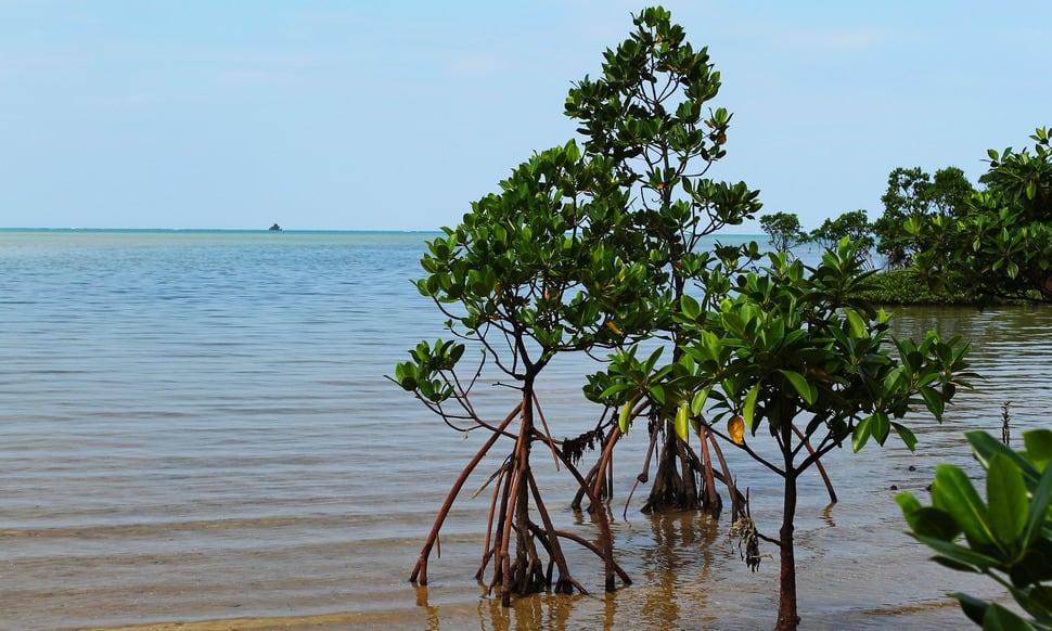 154 : Expeditionen zu den Biotopen der Aquarienfische Teil 2 (Heiko Blessin) 85