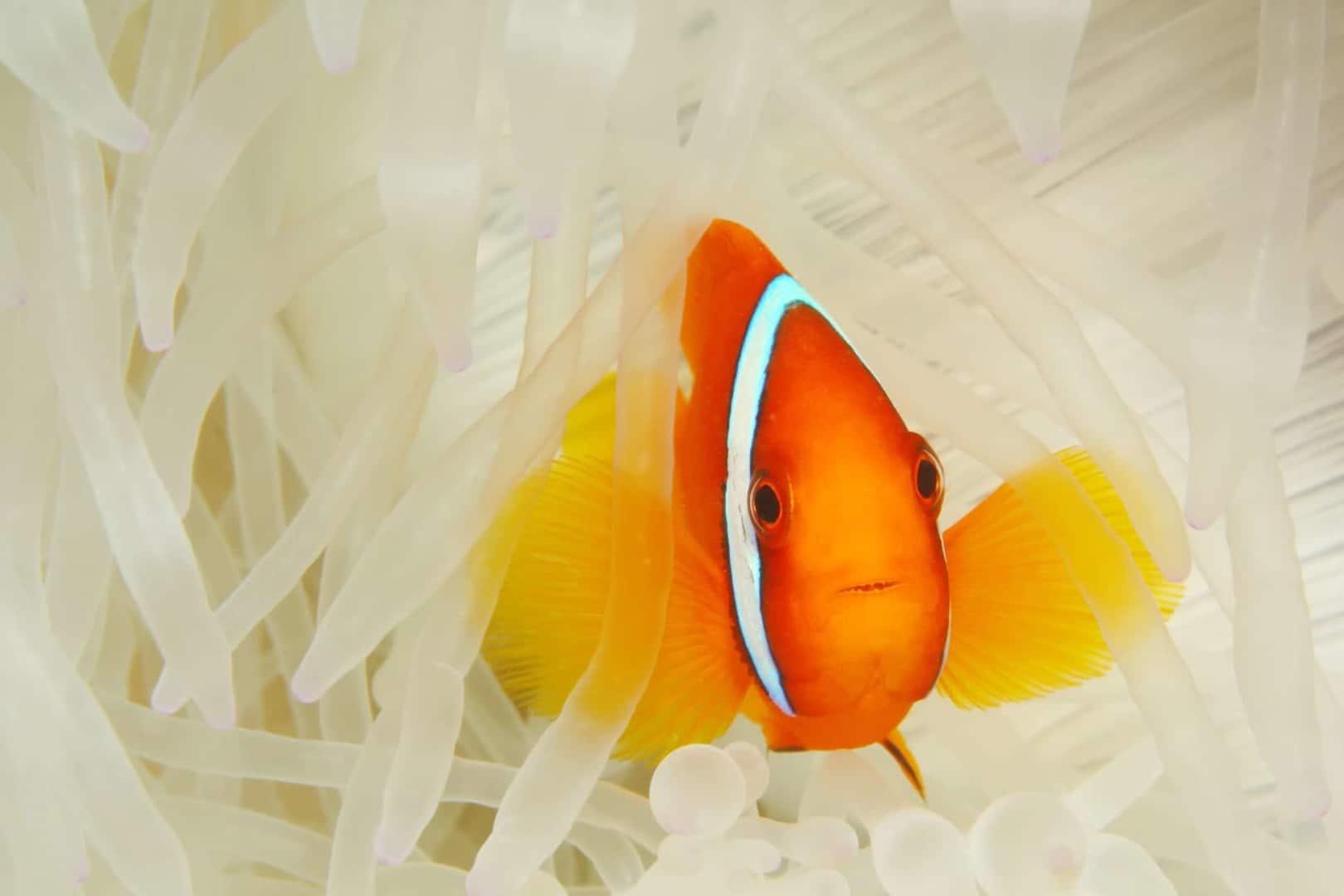 154 : Expeditionen zu den Biotopen der Aquarienfische Teil 2 (Heiko Blessin) 94