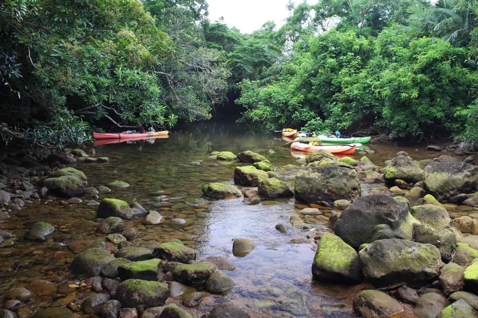 154 : Expeditionen zu den Biotopen der Aquarienfische Teil 2 (Heiko Blessin) 97