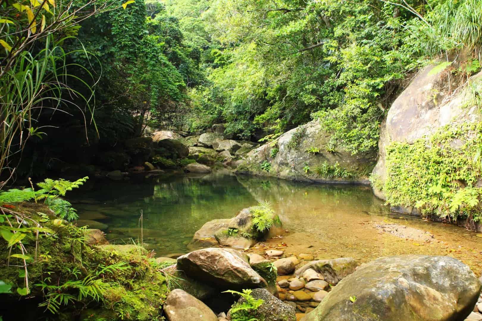 154 : Expeditionen zu den Biotopen der Aquarienfische Teil 2 (Heiko Blessin) 98
