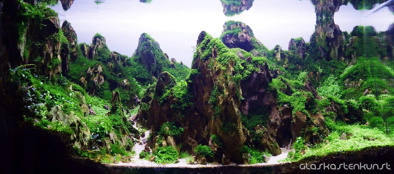 Podcast Episode #152: Die Dry Start Methode (DSM) - Trockenstart des Aquariums (Andy Ruppert) 3