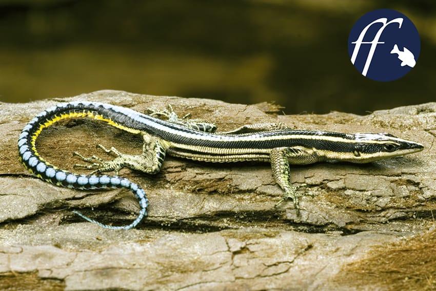 Franky Friday: Amphibien und Reptilien für Nano-Terrarien – Teil 2 1