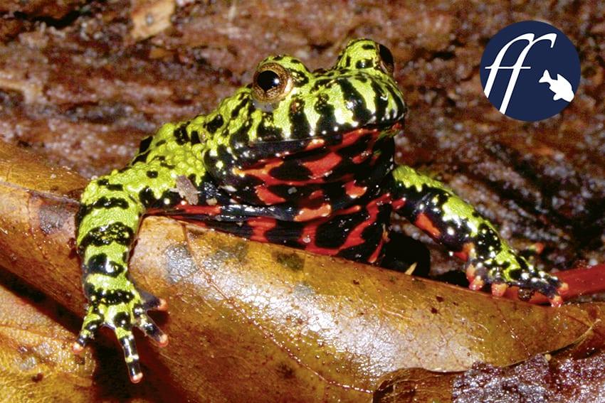Franky Friday: Amphibien und Reptilien für Nano-Terrarien – Teil 1 1