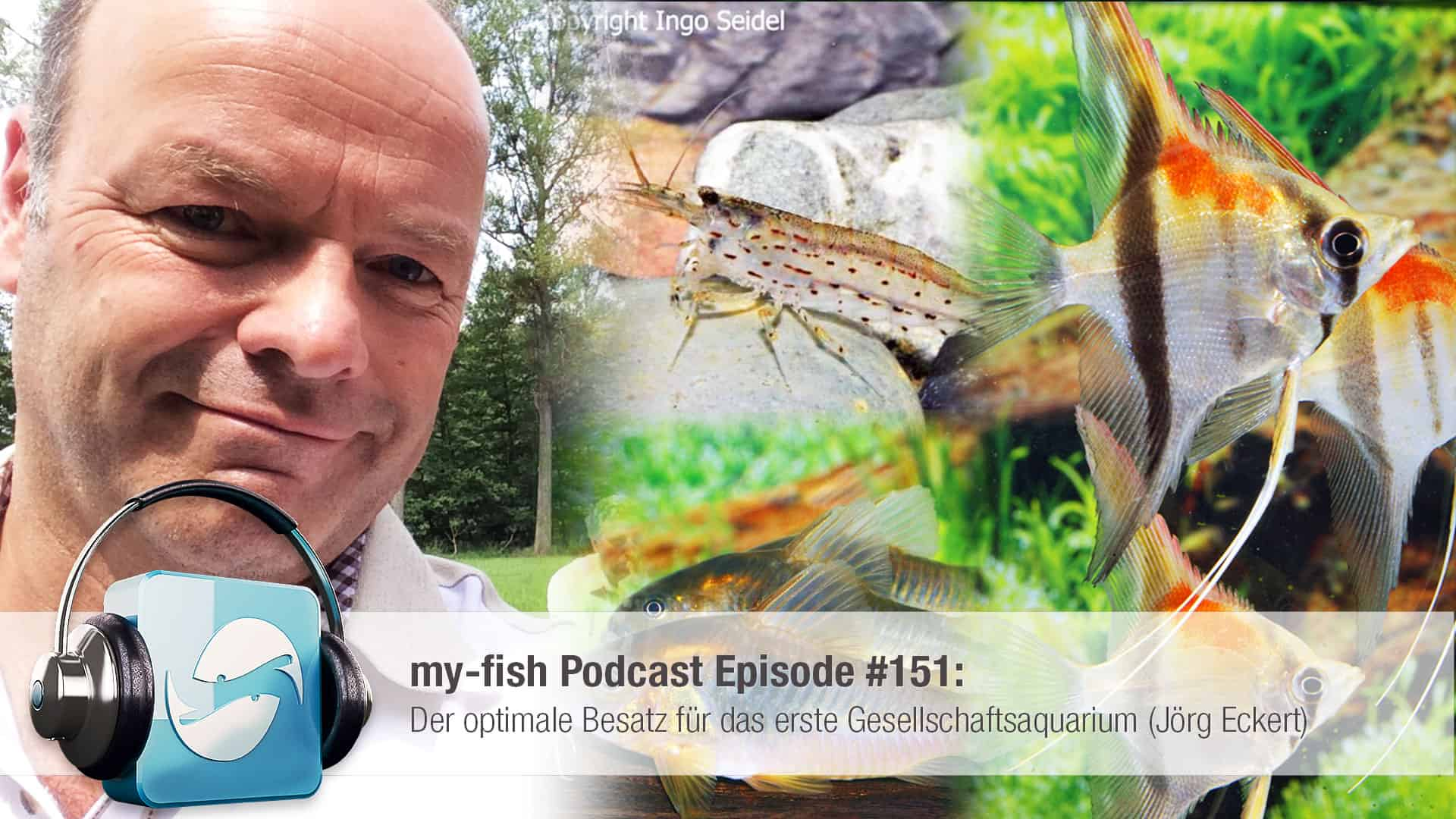 Podcast Episode #151: Der optimale Besatz für das erste Gesellschaftsaquarium (Jörg Eckert) 1