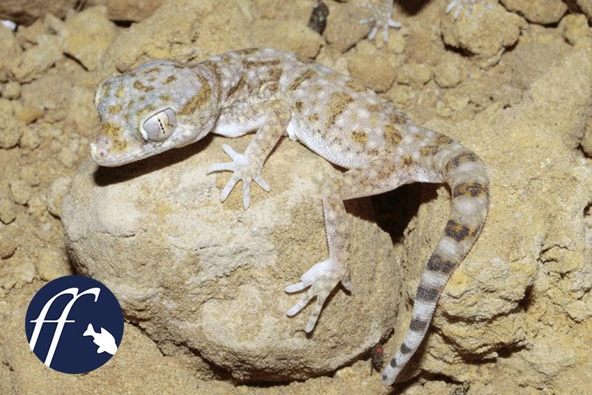 Franky Friday: Amphibien und Reptilien für Nano-Terrarien – Teil 3 1