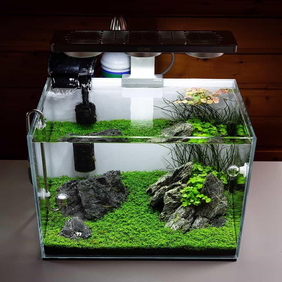 158 5 Tipps zur einfachen Aquarienpflege (Tobias Gawrisch aka AquaOwner) 5