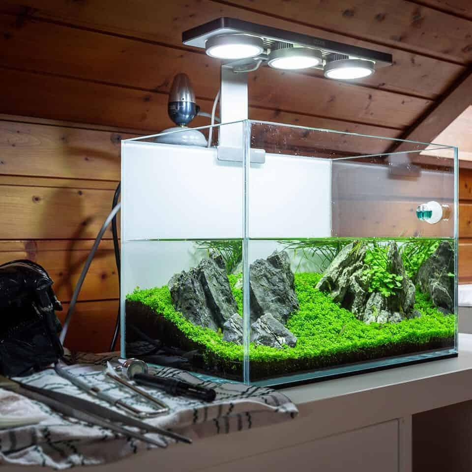 158 5 Tipps zur einfachen Aquarienpflege (Tobias Gawrisch aka AquaOwner) 6