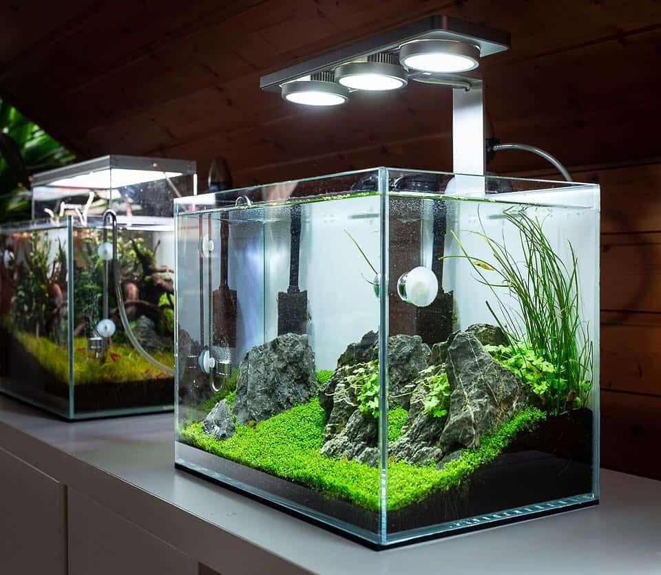 158 5 Tipps zur einfachen Aquarienpflege (Tobias Gawrisch aka AquaOwner) 8