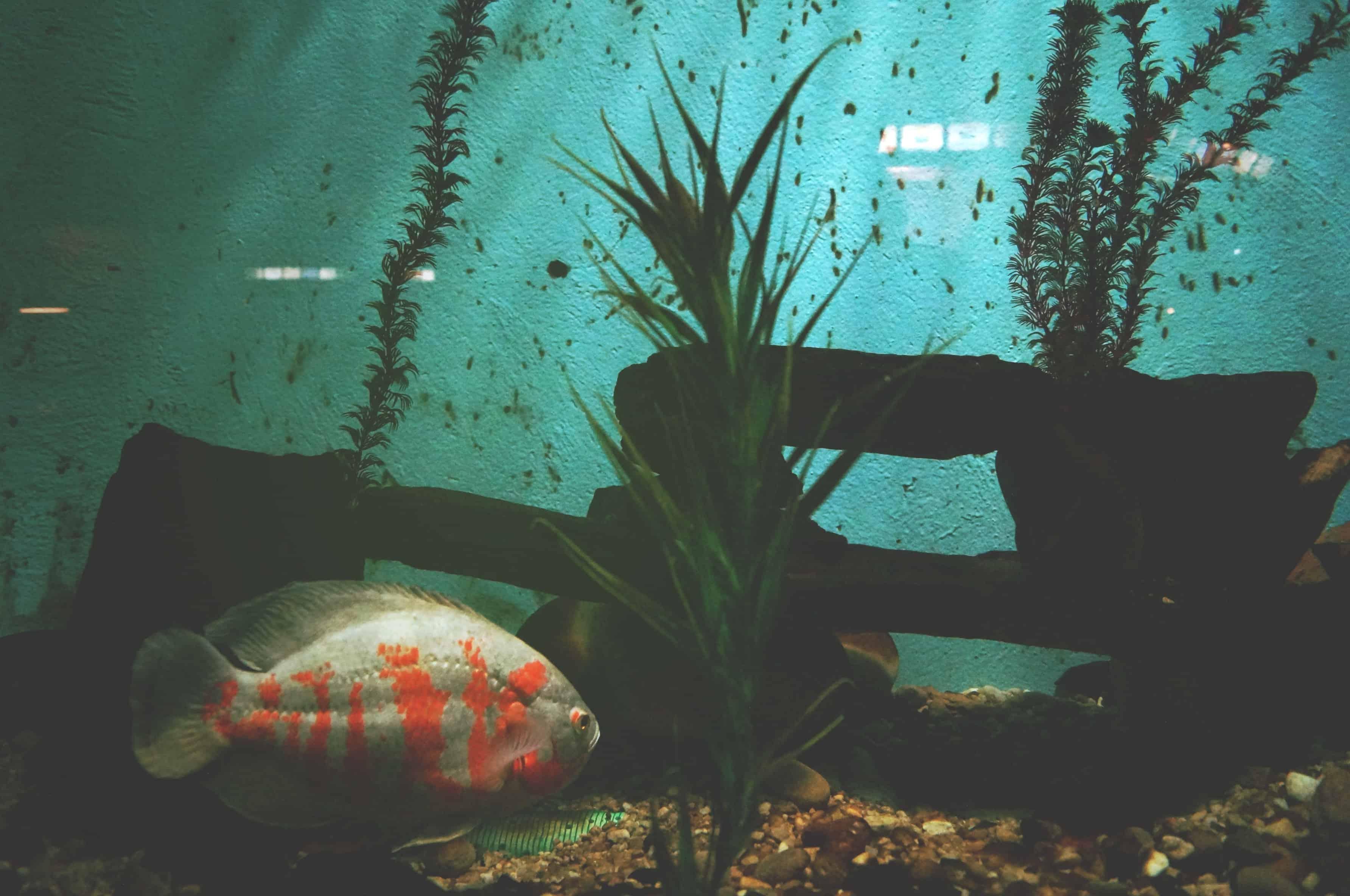Gefahren im Aquarium: Welche Rolle Sauerstoff für die Fische spielt 2