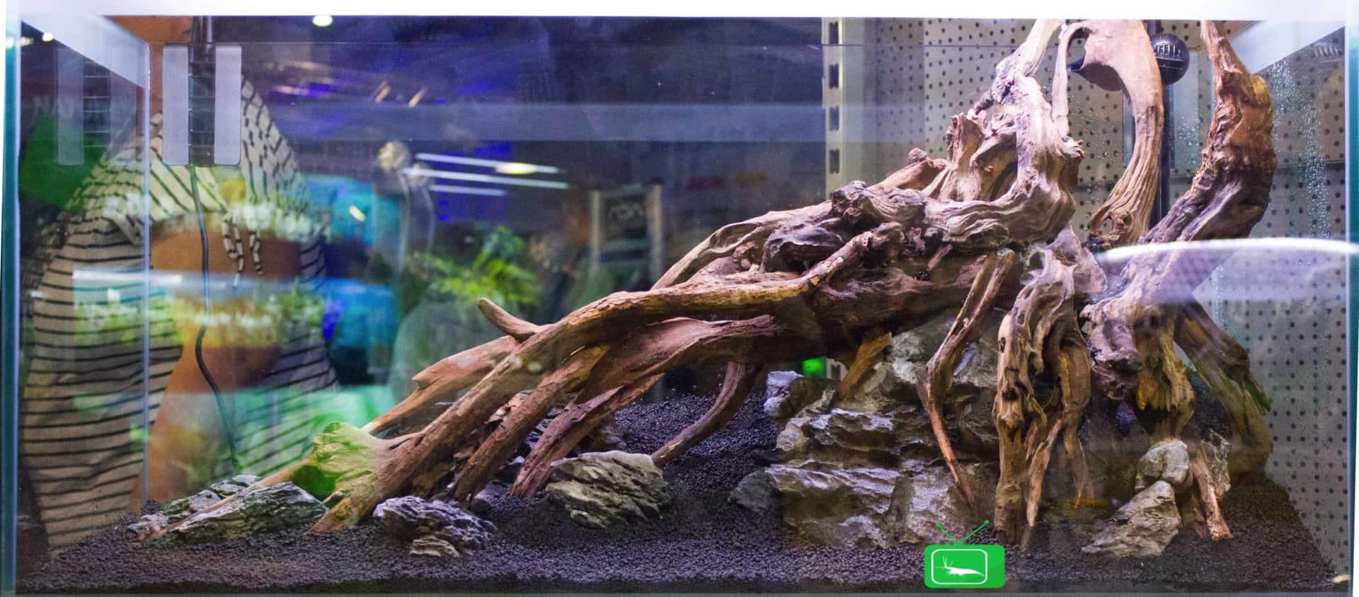 157 : Die Aquarium Design Meisterschule 74