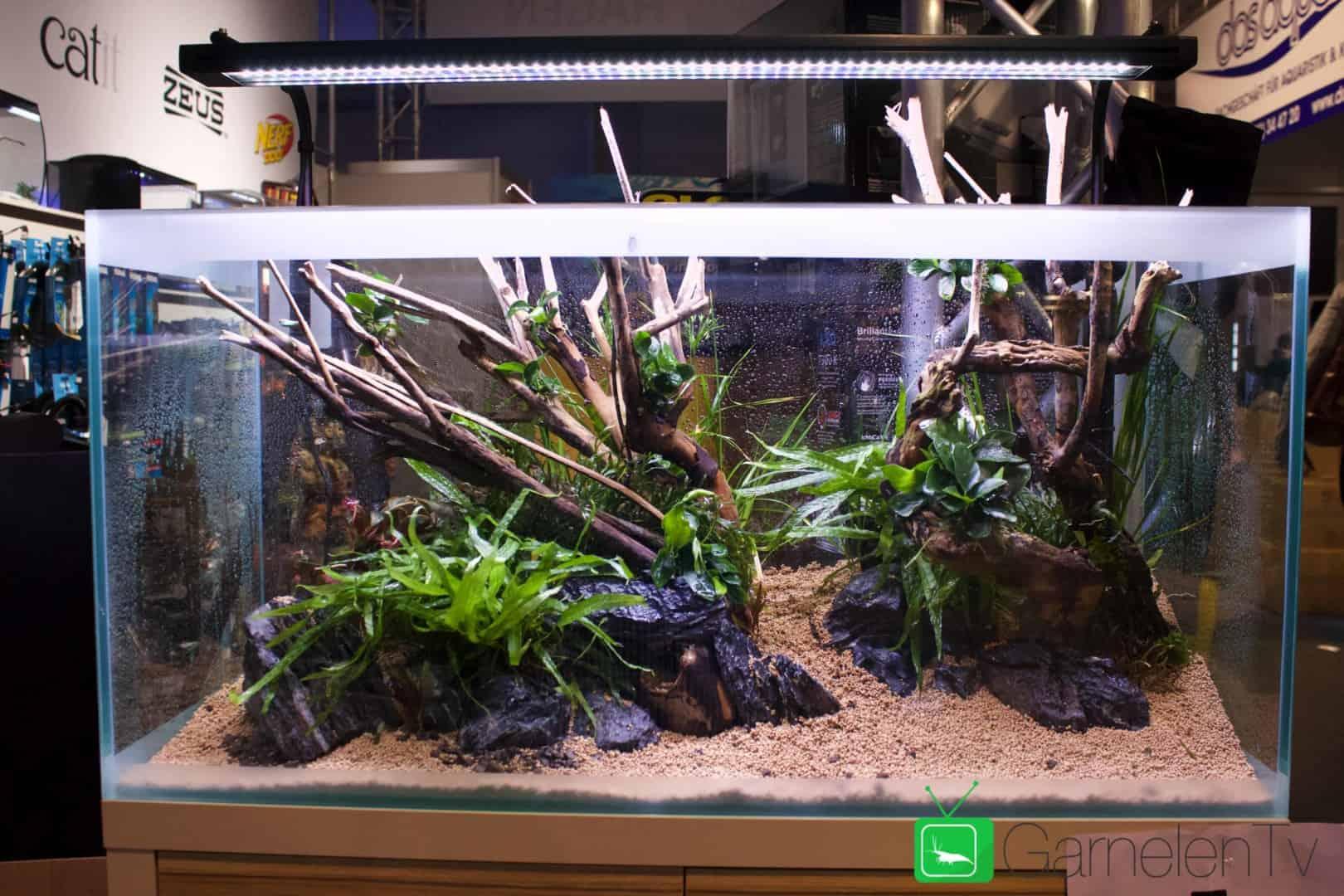 157 : Die Aquarium Design Meisterschule 77