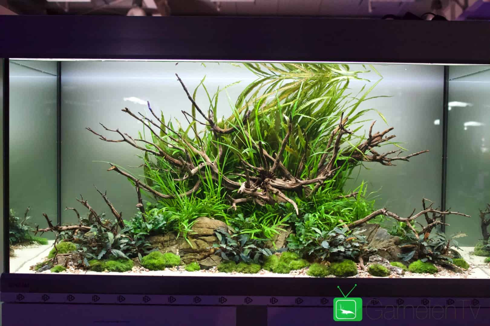 157 : Die Aquarium Design Meisterschule 79