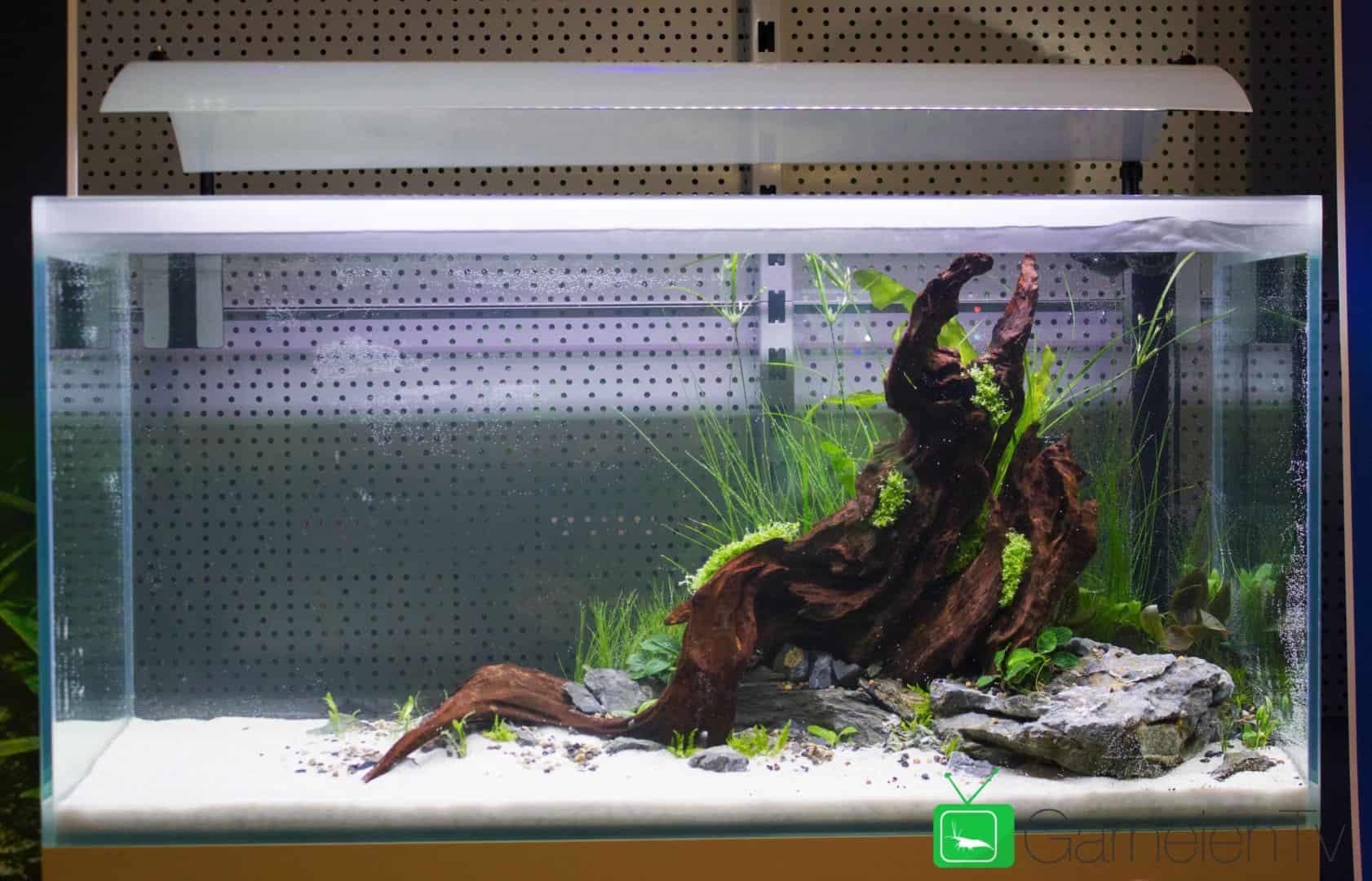 157 : Die Aquarium Design Meisterschule 111