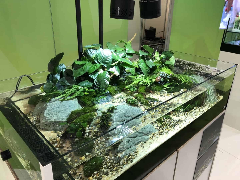 161 Aquascaping Trends auf der Interzoo (Oliver Knott) 9