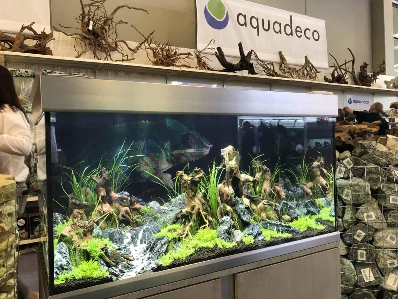 165 Aquaristik Trends auf der Interzoo (Matthias Wiesensee) 72