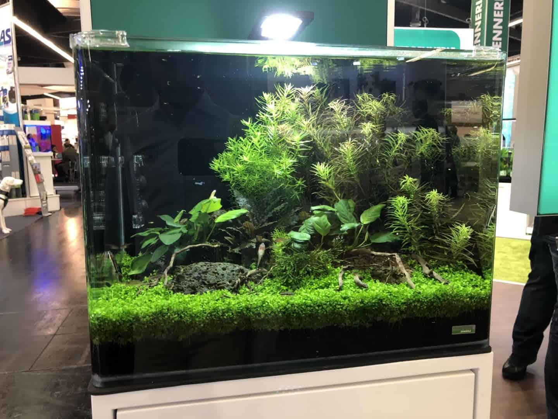 165 Aquaristik Trends auf der Interzoo (Matthias Wiesensee) 12