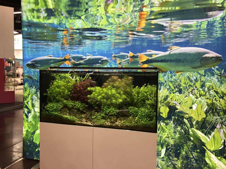 165 Aquaristik Trends auf der Interzoo (Matthias Wiesensee) 73