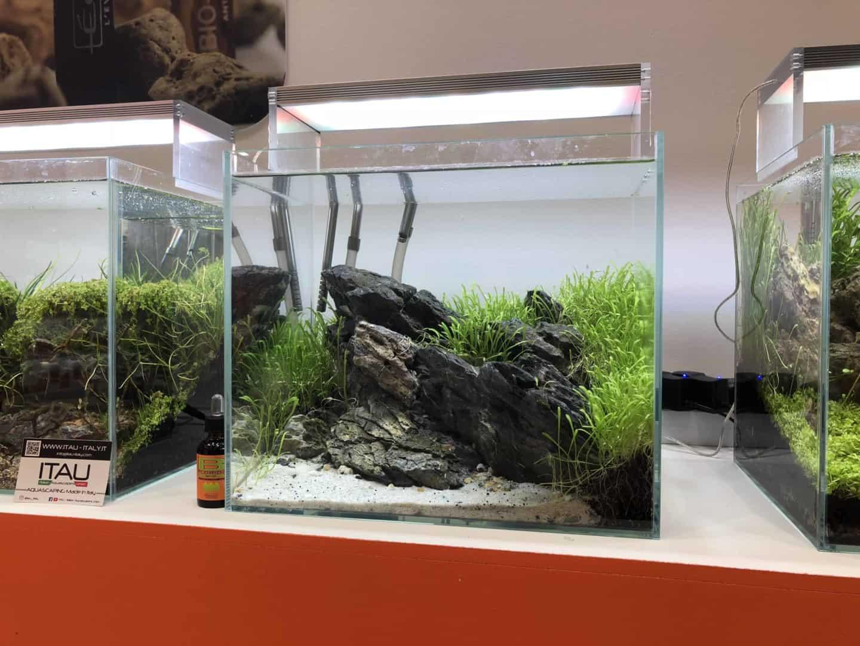 165 Aquaristik Trends auf der Interzoo (Matthias Wiesensee) 20
