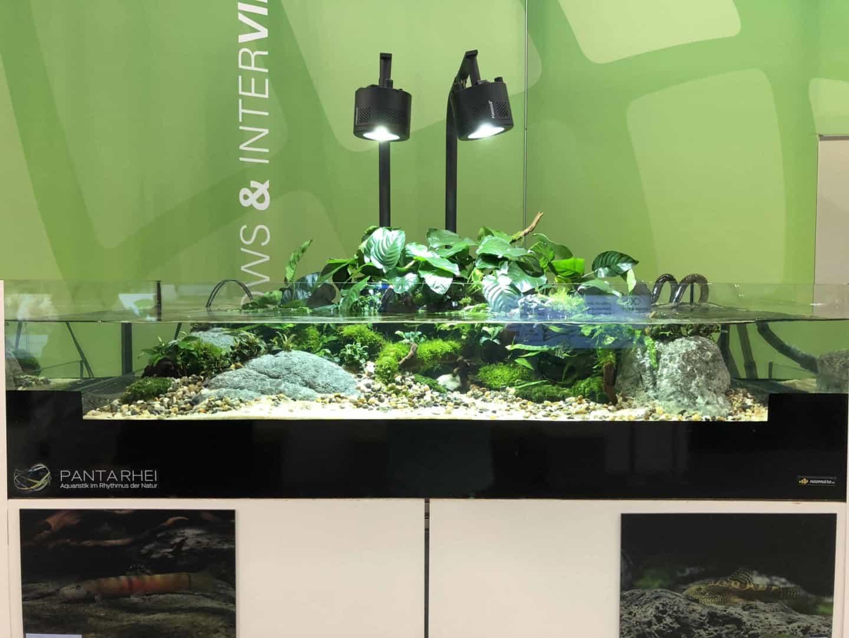 165 Aquaristik Trends auf der Interzoo (Matthias Wiesensee) 48