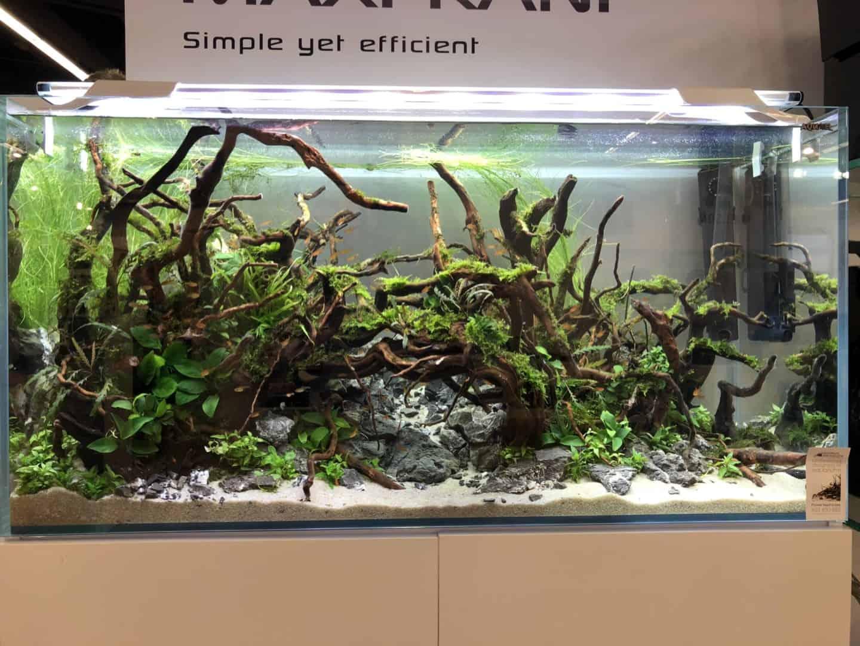 165 Aquaristik Trends auf der Interzoo (Matthias Wiesensee) 51