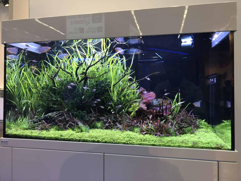 165 Aquaristik Trends auf der Interzoo (Matthias Wiesensee) 45