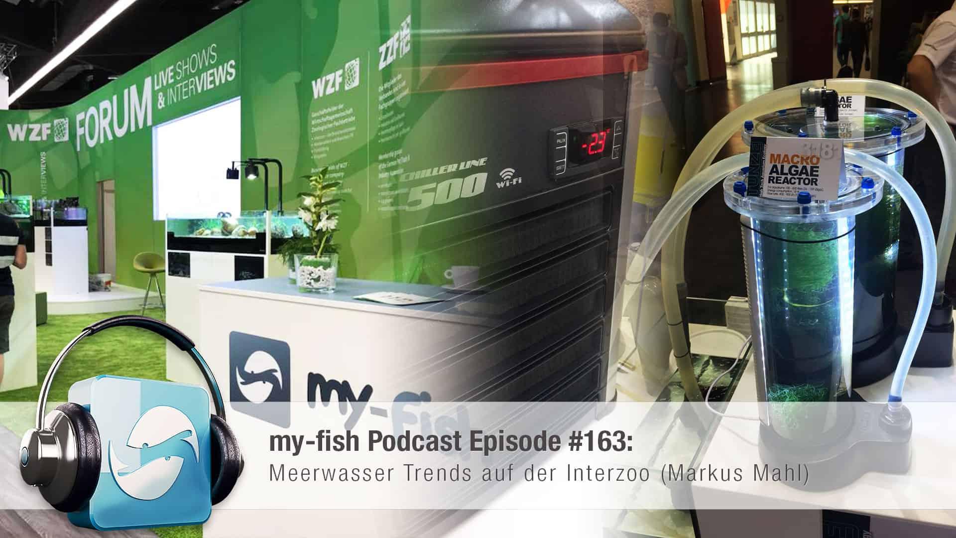 163 Meerwasser Trends auf der Interzoo (Markus Mahl) - my-fish