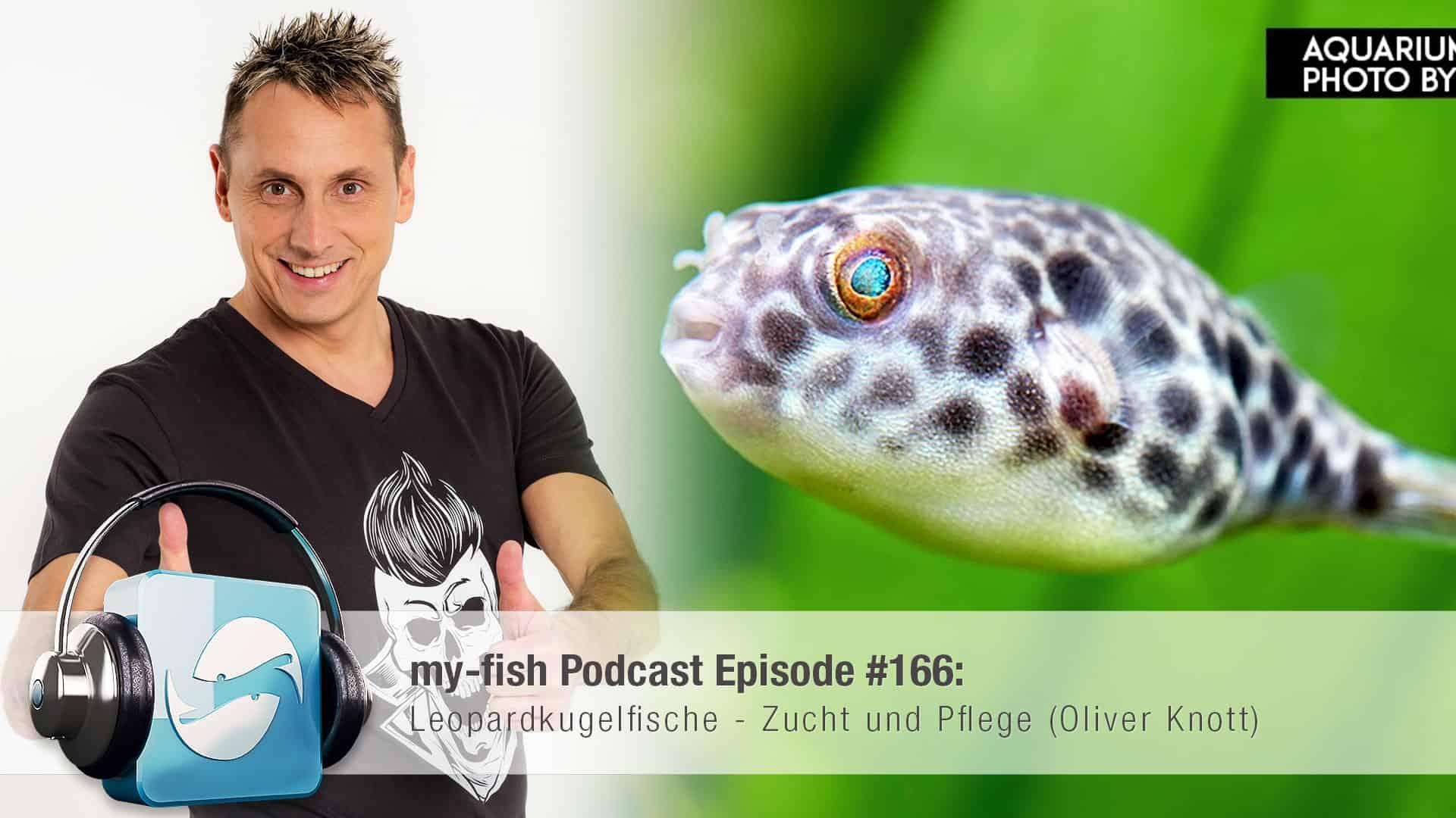 Podcast Episode #166: Leopardkugelfische - Zucht und Pflege (Oliver Knott) 1