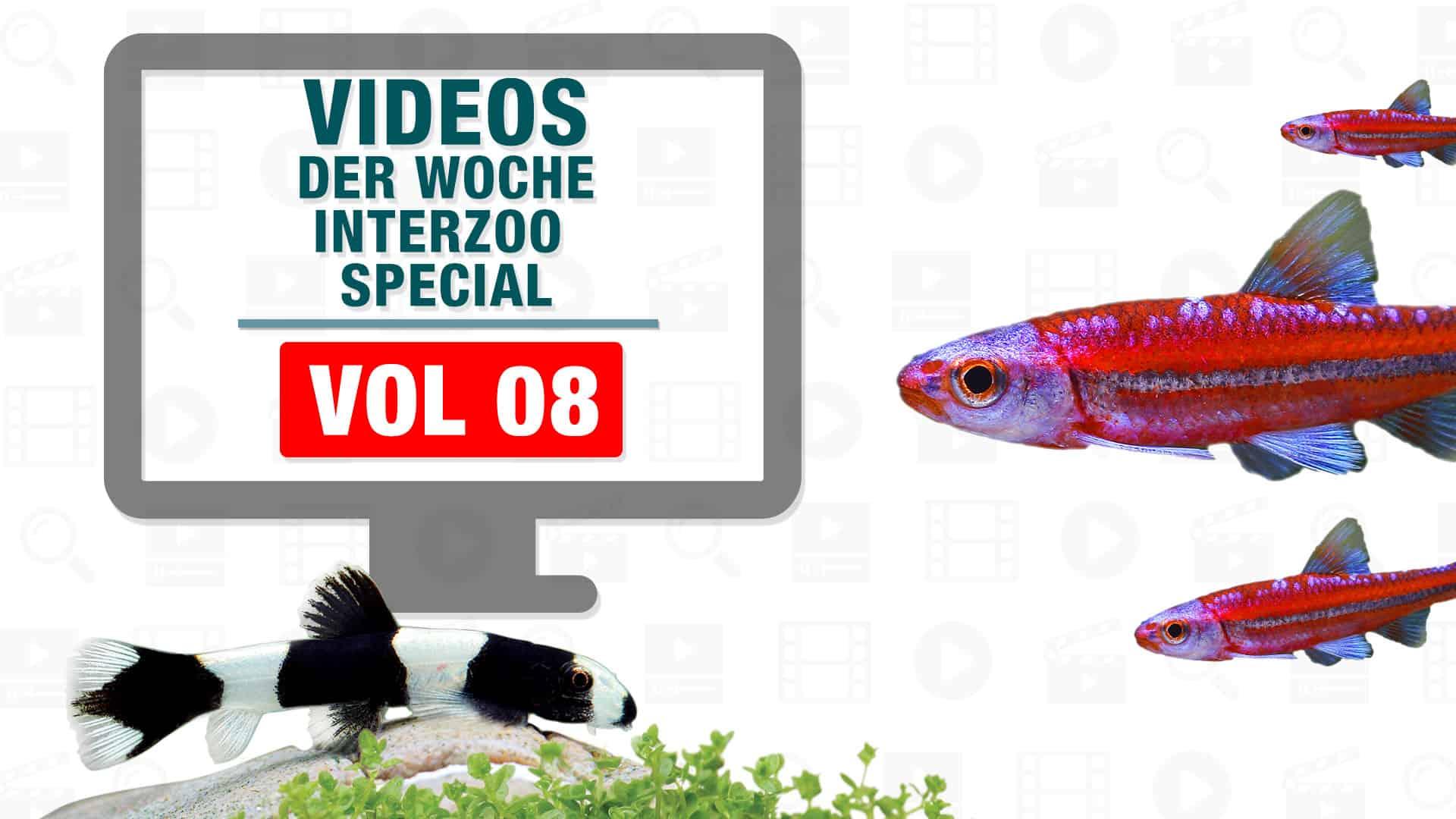 Videos der Woche - Interzoo Special 1