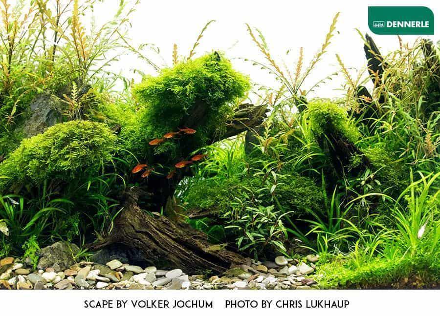 173 Das Aquarium algenfrei starten (Volker Jochum) 2