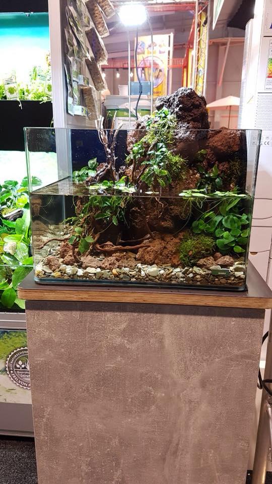 173 Das Aquarium algenfrei starten (Volker Jochum) 8