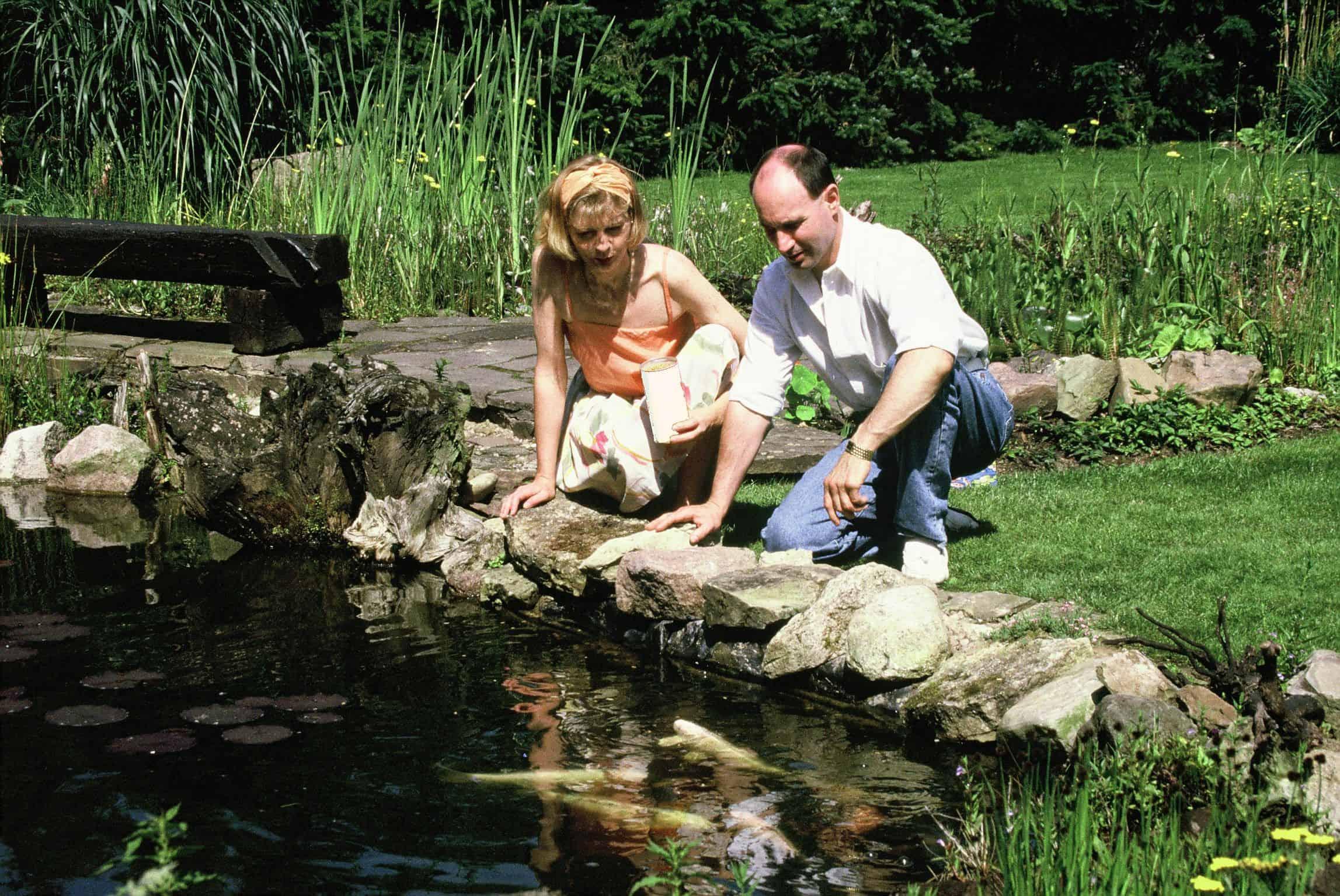 Fische für den kleinen Teich: Der ideale Besatz 1