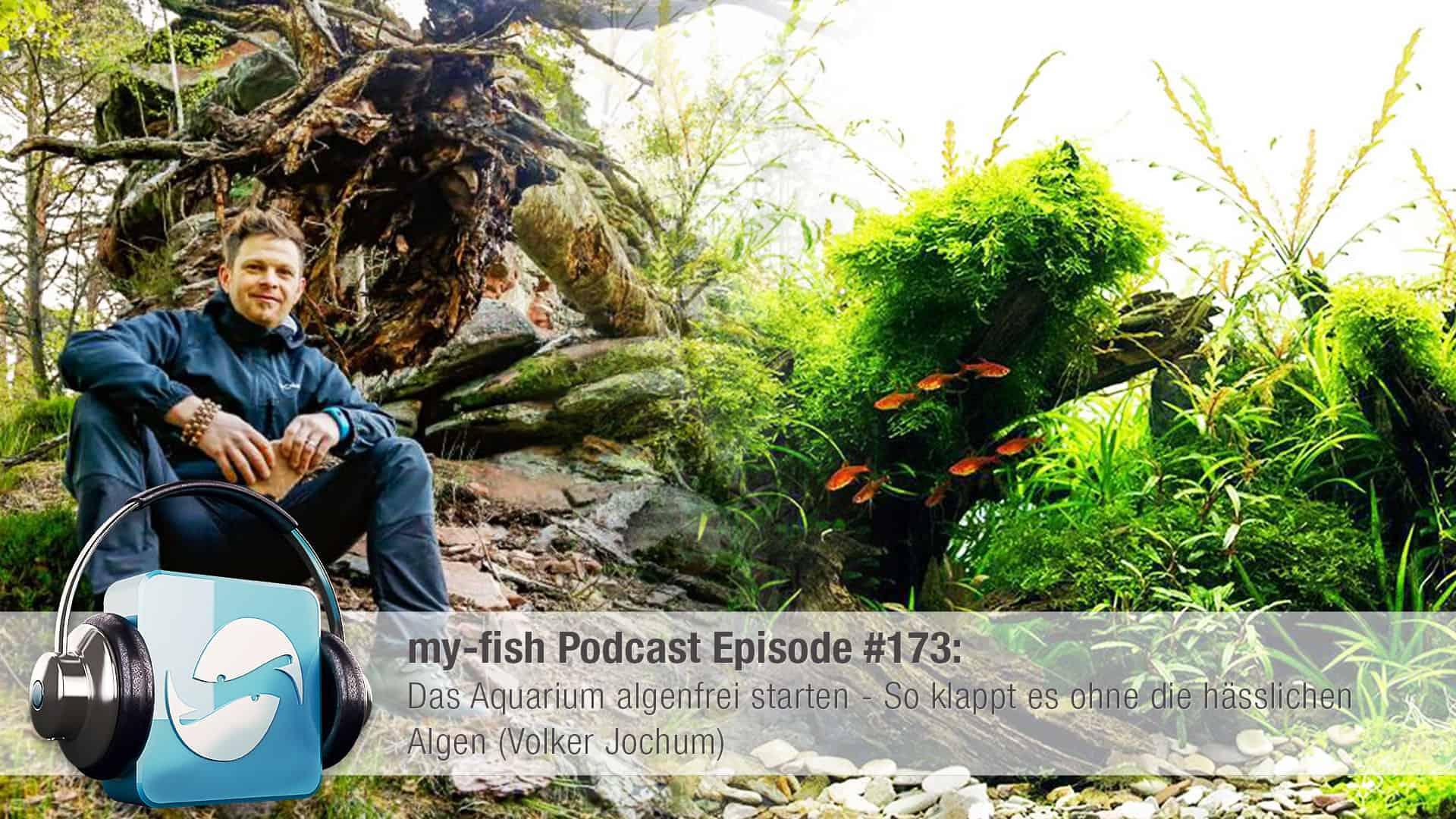173 Das Aquarium algenfrei starten (Volker Jochum) 1