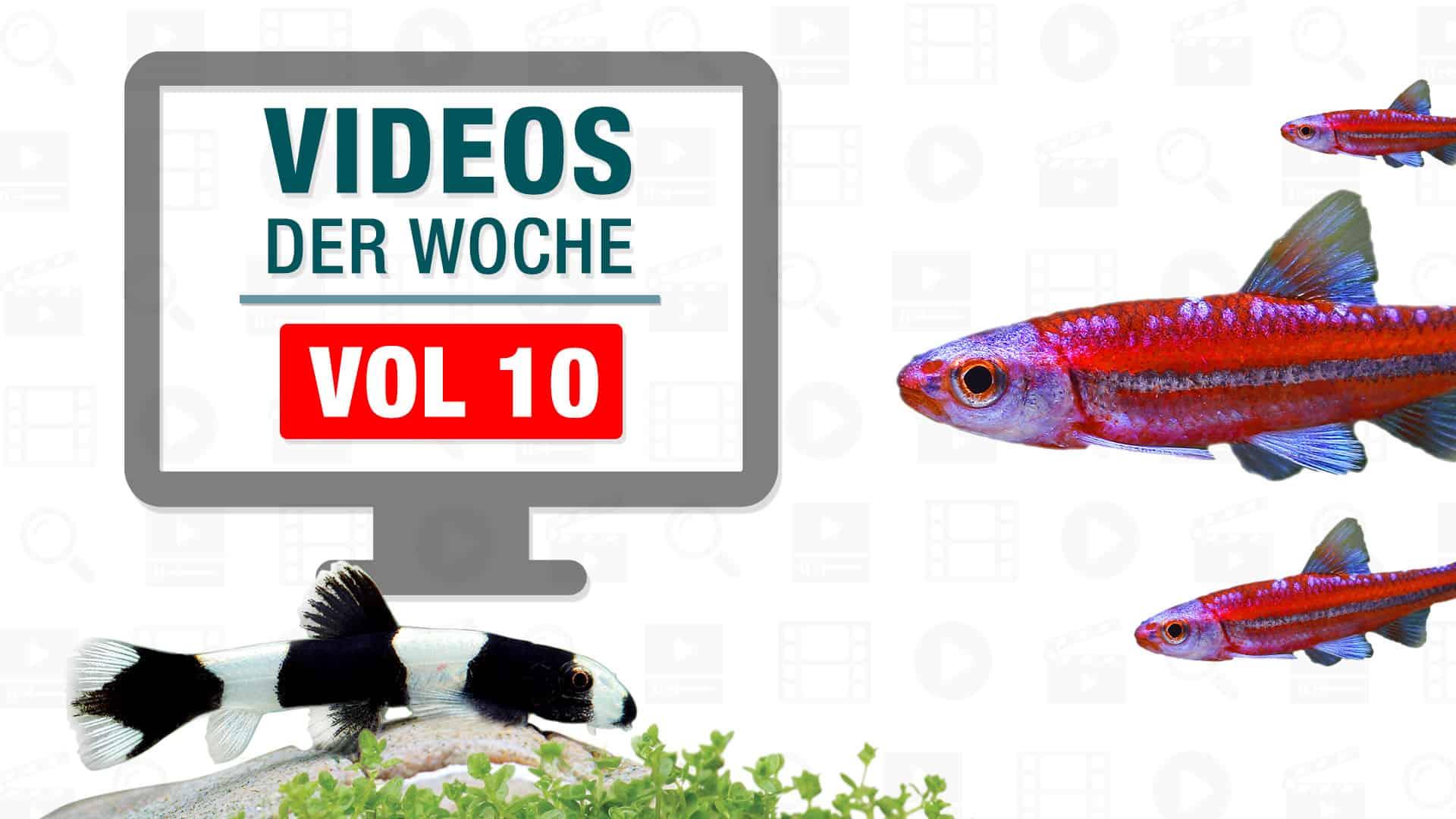 Videos der Woche - Vol.10 1