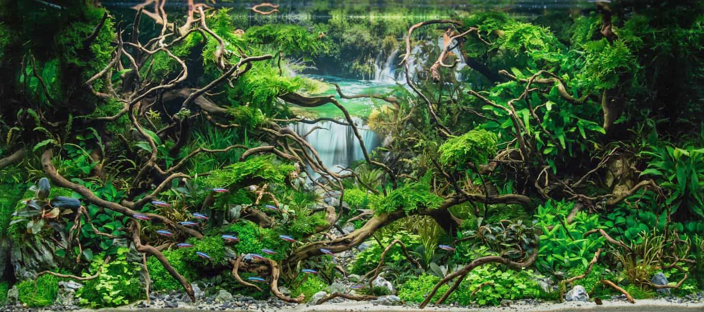 179 BiOrbs - 360° Sicht ins Biotop (Adrie Baumann) 4