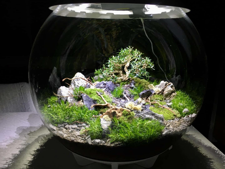179 BiOrbs - 360° Sicht ins Biotop (Adrie Baumann) 7