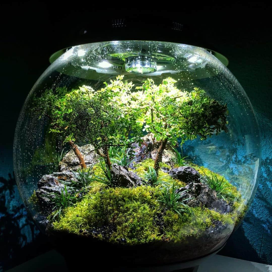 179 BiOrbs - 360° Sicht ins Biotop (Adrie Baumann) 19