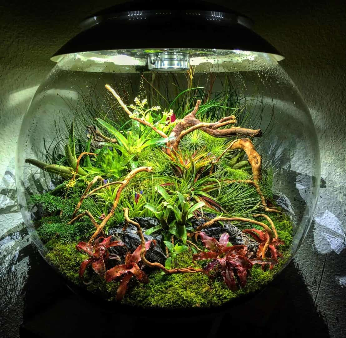 179 BiOrbs - 360° Sicht ins Biotop (Adrie Baumann) 20