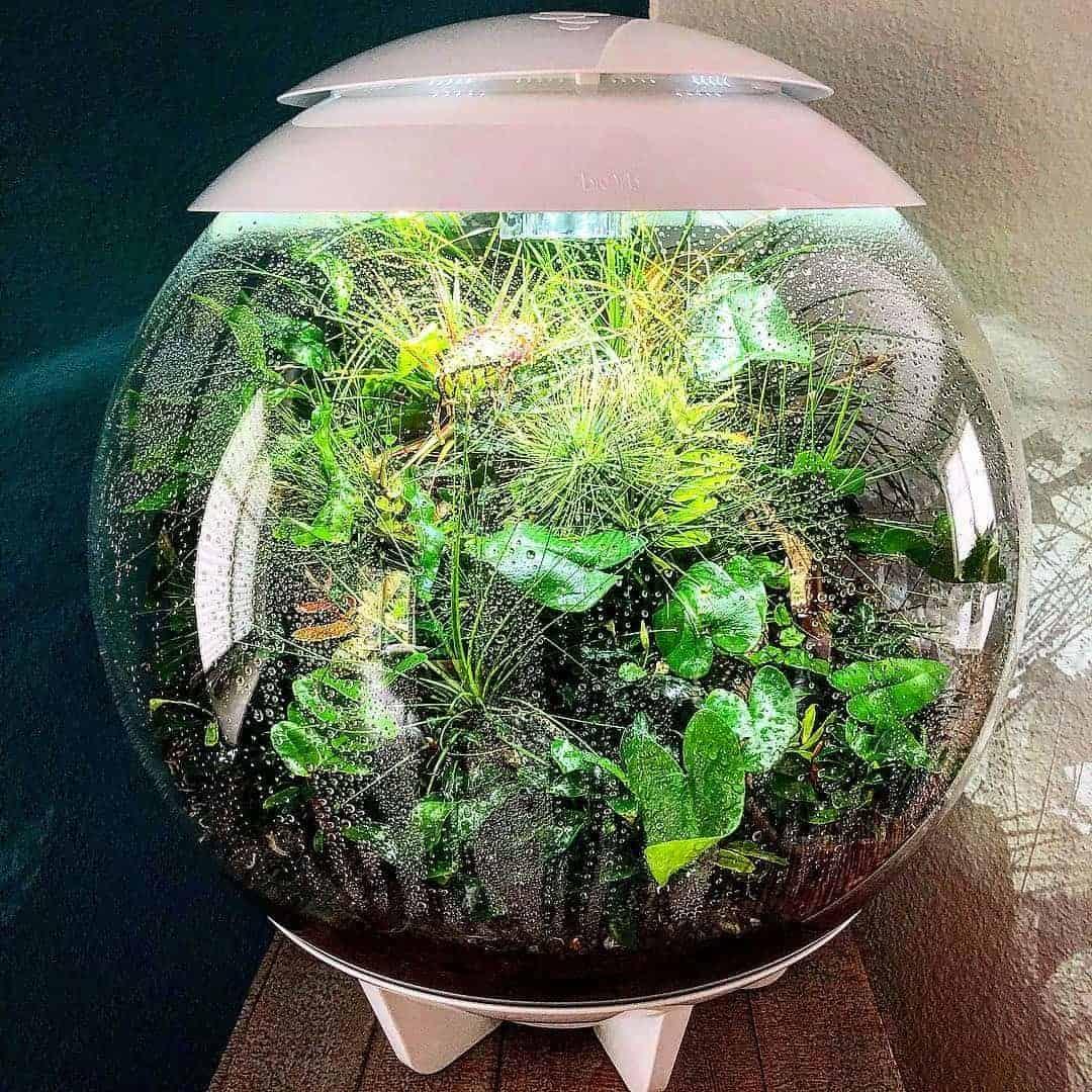 179 BiOrbs - 360° Sicht ins Biotop (Adrie Baumann) 22