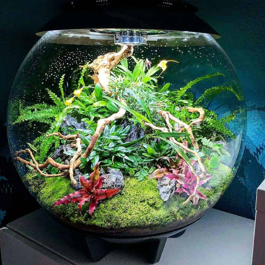 179 BiOrbs - 360° Sicht ins Biotop (Adrie Baumann) 25