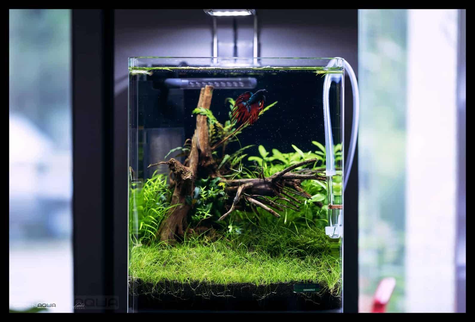 174 Green Aqua 2.0 (Volker Jochum) 10