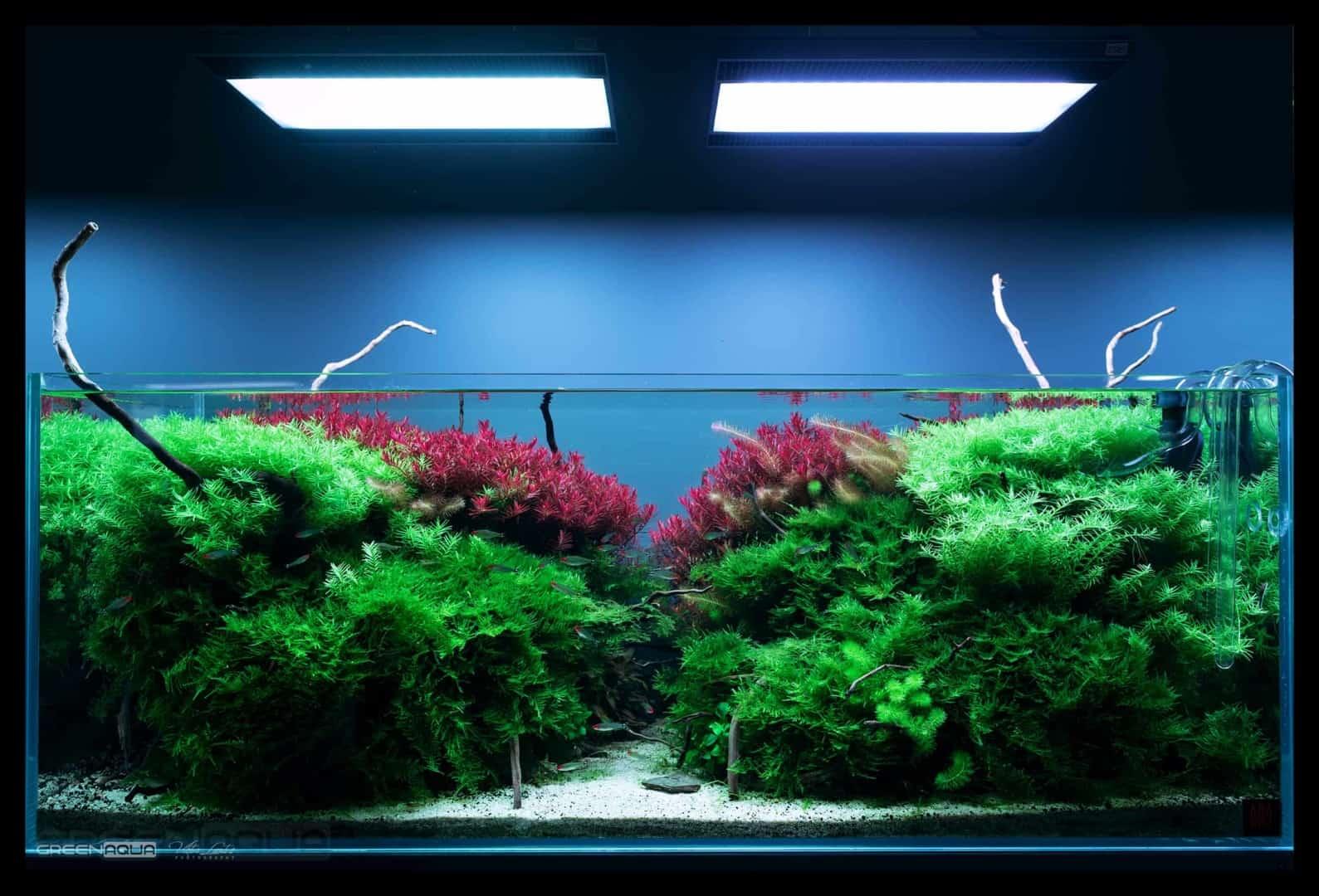 174 Green Aqua 2.0 (Volker Jochum) 11