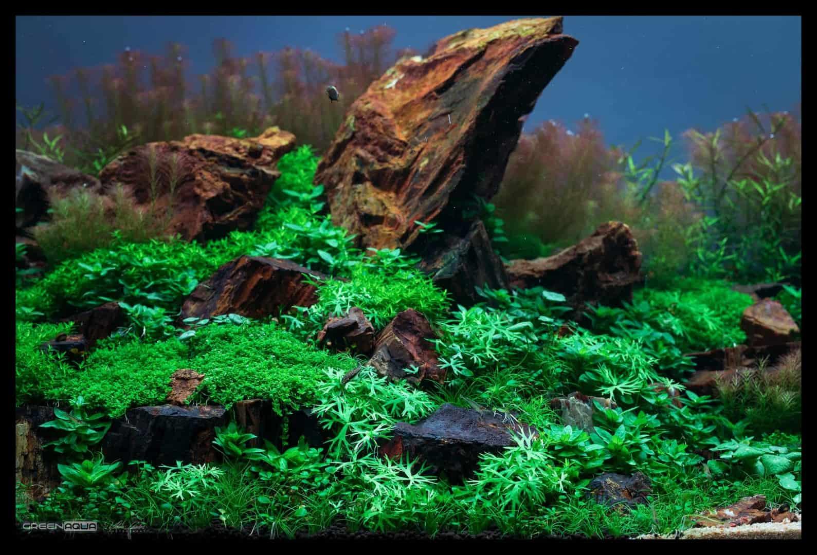 174 Green Aqua 2.0 (Volker Jochum) 20