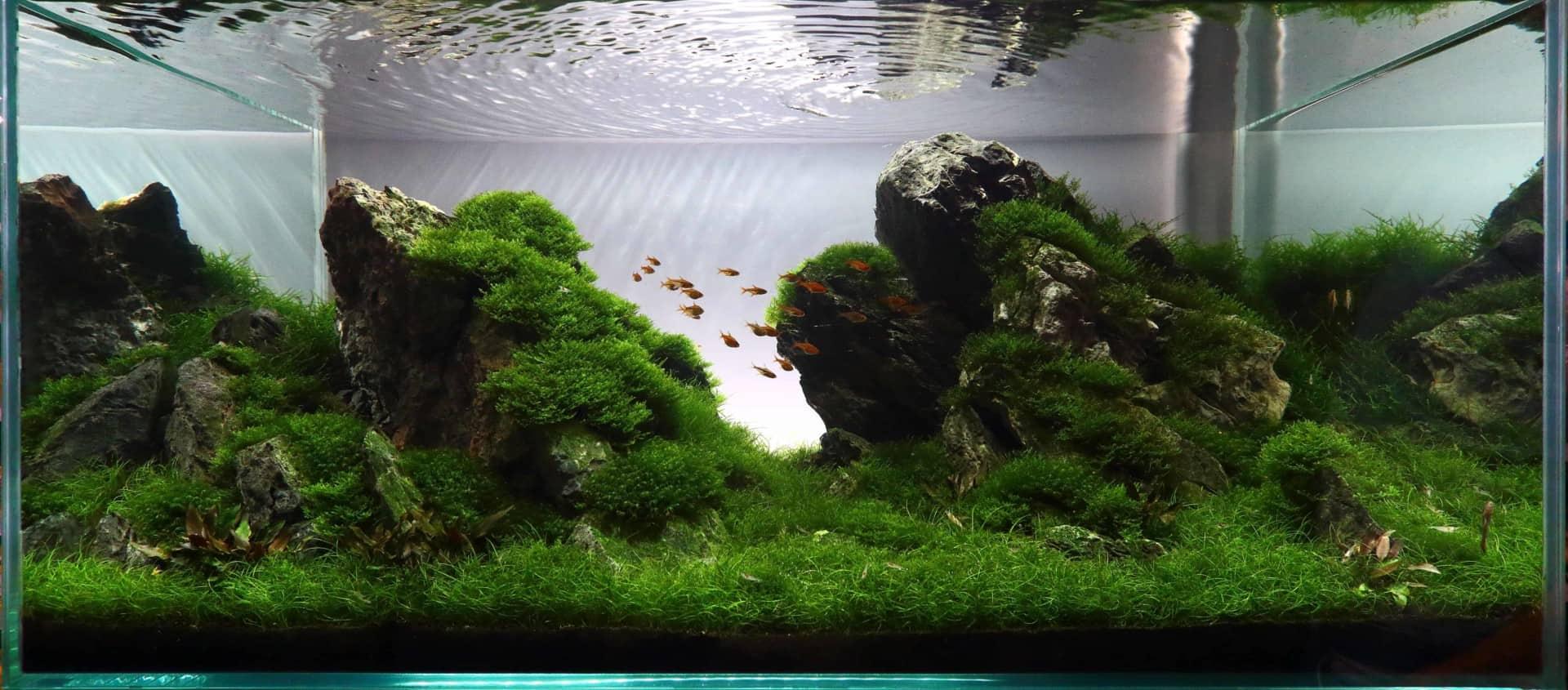175 Riccia fluitans - Das schwimmende Teichlebermoos 13