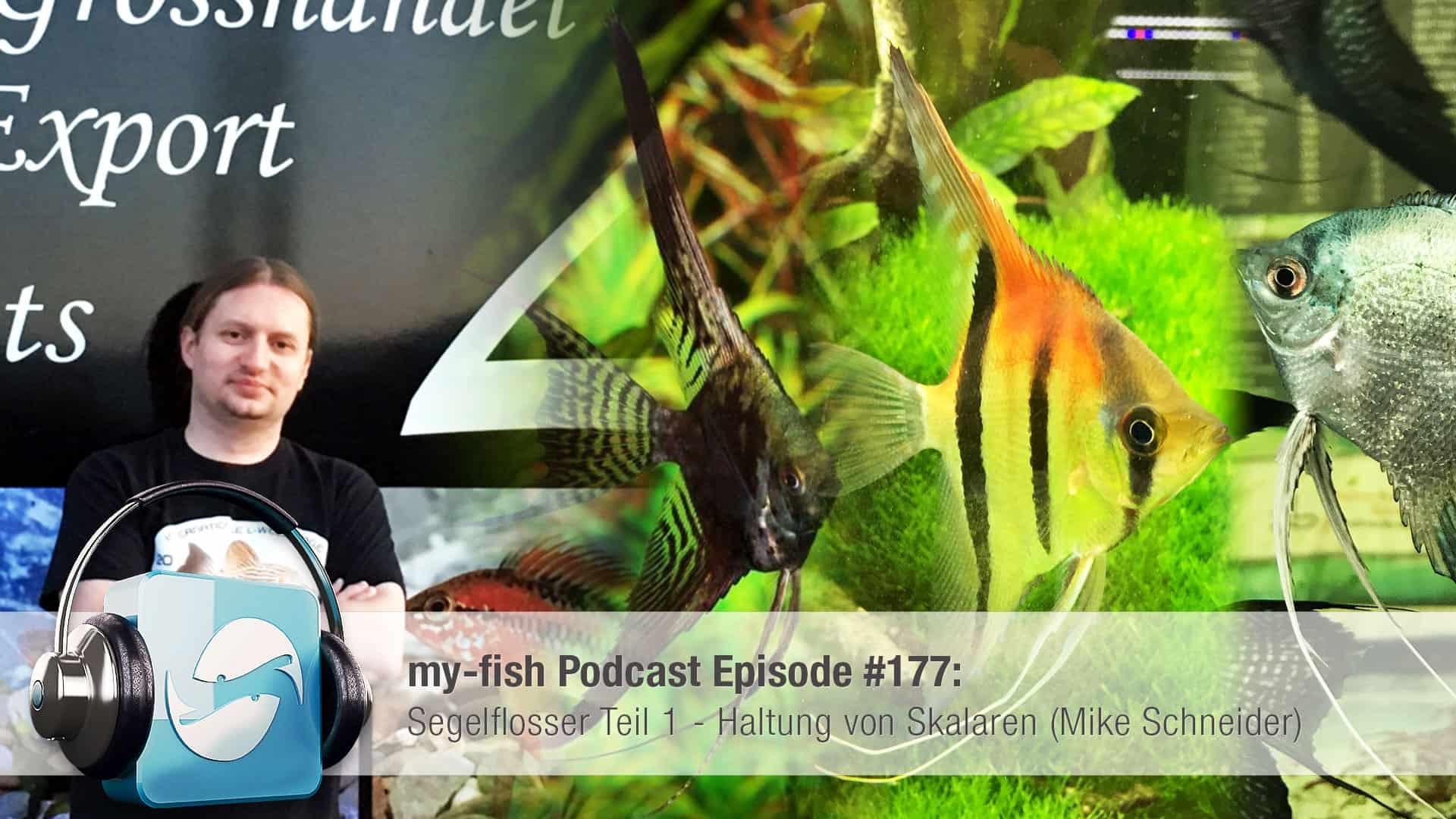 Podcast Episode #177: Segelflosser Teil 1 - Haltung von Skalaren (Mike Schneider) 1