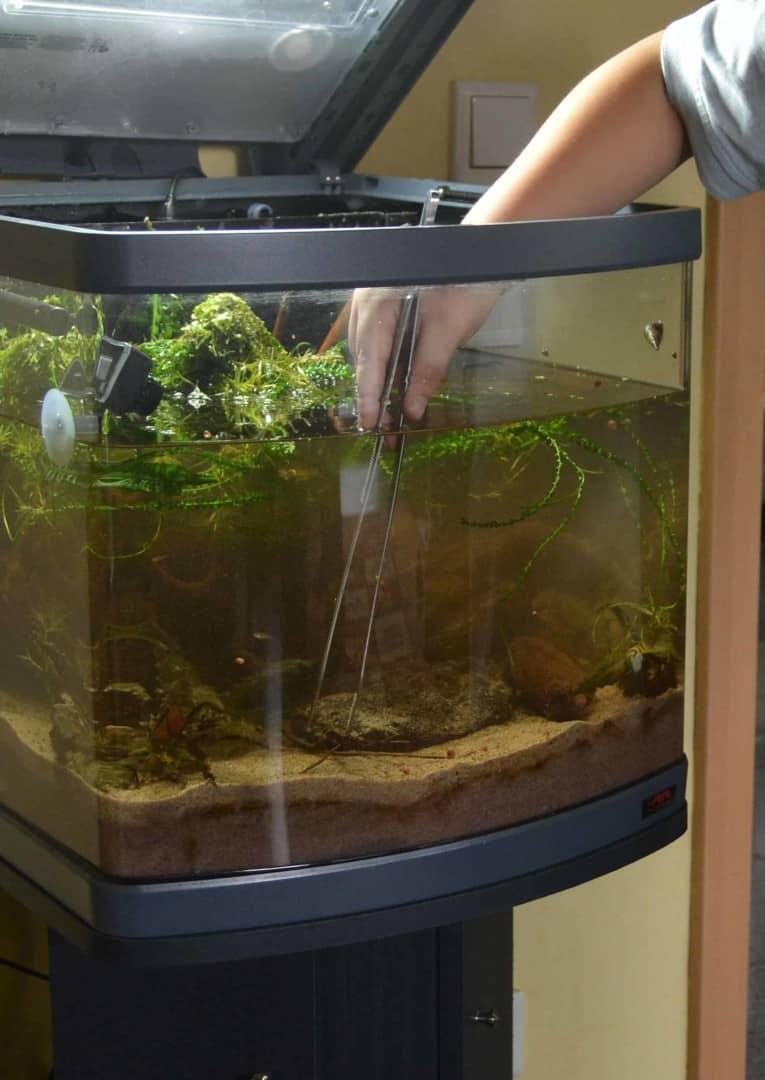 Verbreitete Missverständnisse in der Aquaristik 7