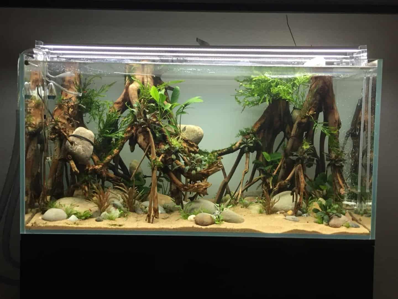 182 Vom Aquascape zum Biotop Aquarium (Dennis Laufer) 19