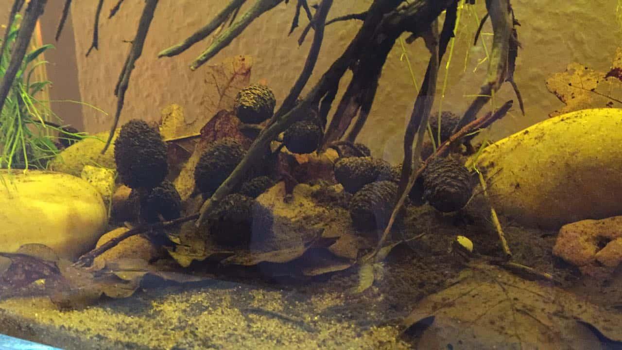 182 Vom Aquascape zum Biotop Aquarium (Dennis Laufer) 4