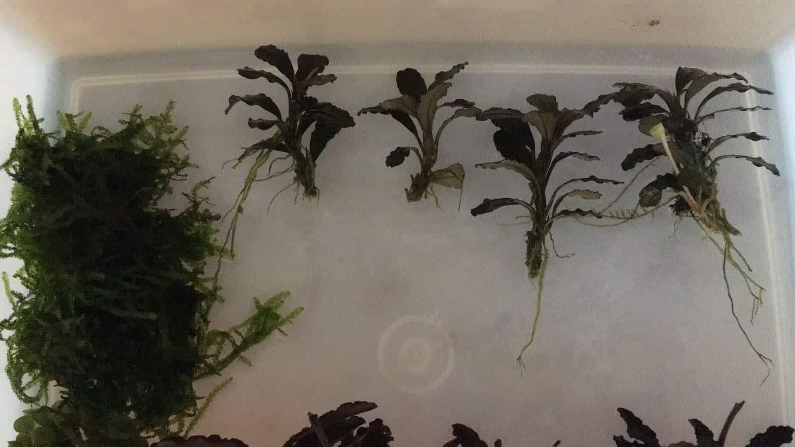 182 Vom Aquascape zum Biotop Aquarium (Dennis Laufer) 21